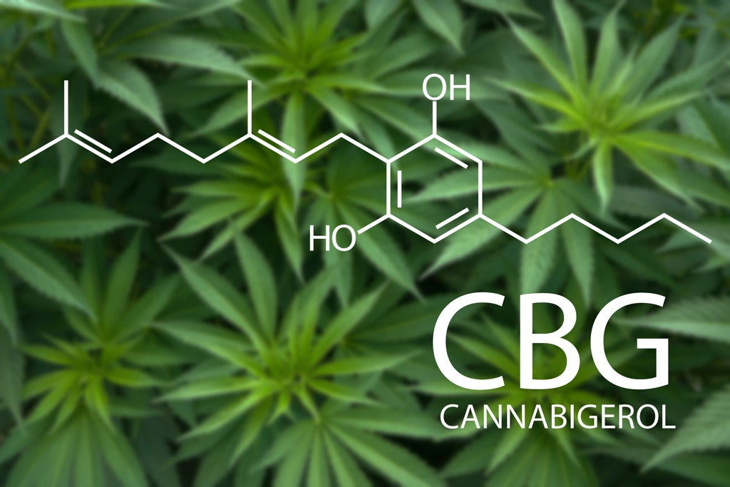 CBG, The Mother Of Cannabinoids, Is In The Spotlight | Benzinga