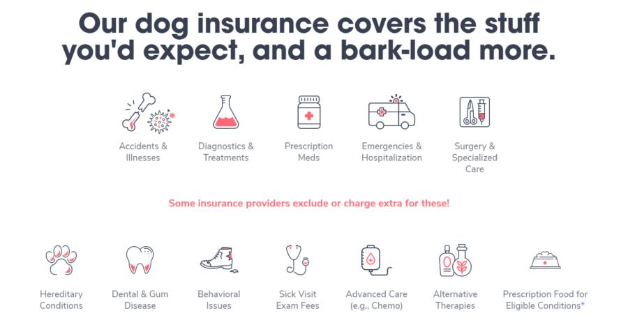 dog insurance coverage options