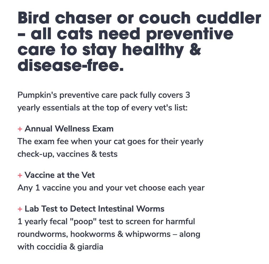 Assurance pour animaux de compagnie citrouille - options pour chats